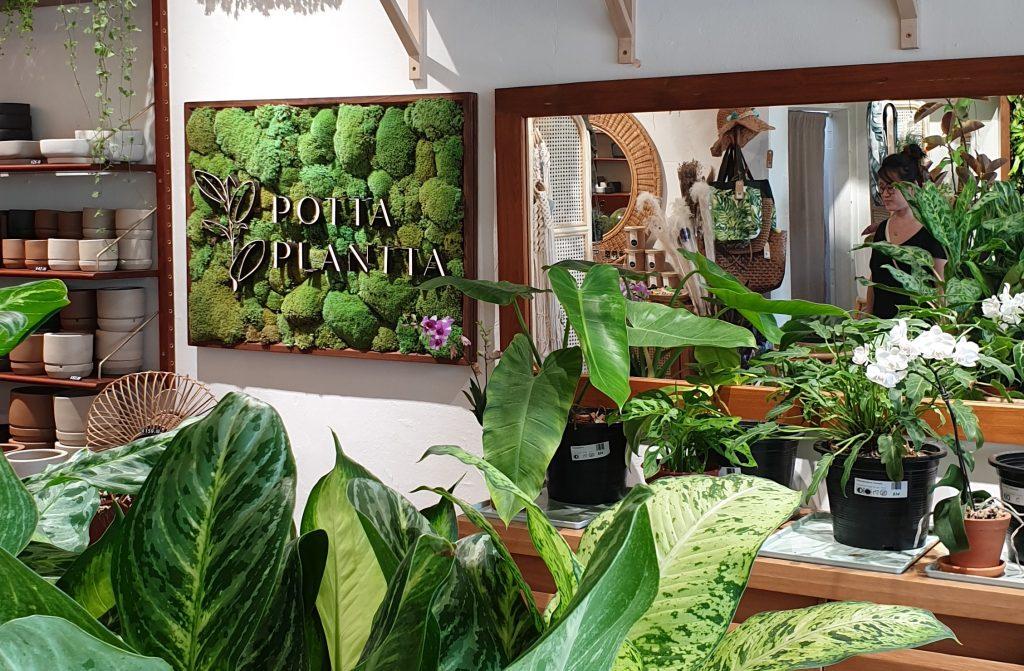 Potta Plantta - where to buy plants in Singapore
