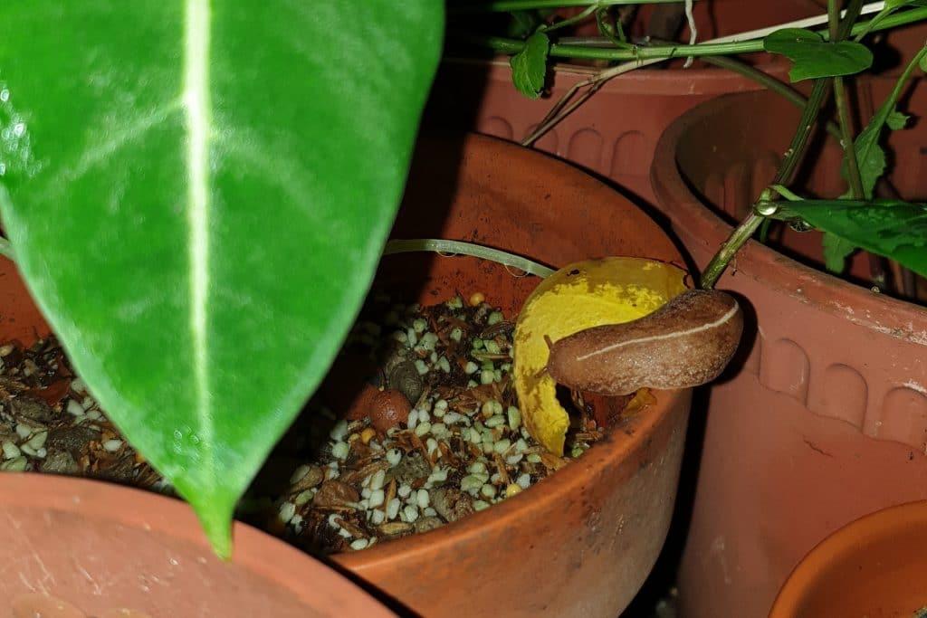 Get rid of slugs